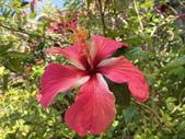 我家花園的花卉:20200315_123622-uid-EA4F5FAD-8C3C-4897-895E-BDDF6696F228.jpeg