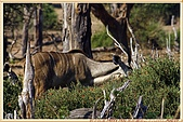 14.東非獵奇行-玻茲瓦納-丘北國家公園:_MG_2702玻茲瓦那_蠻荒樂園-丘北國家公園.JPG