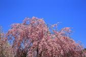 日本12天賞紫藤....VIP團之旅34-29角館-武家屋敷園區:A81Q7663.JPG