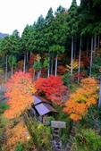 日本四國人文藝術+楓紅深度之旅-祖谷溪藤橋飯店53-30:A81Q0207.JPG