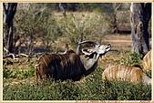 14.東非獵奇行-玻茲瓦納-丘北國家公園:_MG_2703玻茲瓦那_蠻荒樂園-丘北國家公園.JPG
