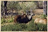 14.東非獵奇行-玻茲瓦納-丘北國家公園:_MG_2704玻茲瓦那_蠻荒樂園-丘北國家公園.JPG