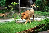 15-5-峇里島-Safari Marine Park野生動物園:IMG_1216峇里島-Safari Marine Park野生動物園.jpg