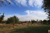 19-6敘利亞Syria-阿雷波ALEPPO_阿雷波古城堡(The Citadel):IMG_6211利亞Syria-阿雷波ALEPPO_往帕米拉PALMYRA 住宿飯店.jpg