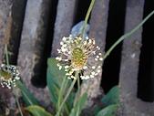塞爾維亞SERBIA_貝爾格勒BELGRADE采風:DSC01289塞爾維亞_貝爾格勒BELGRADE_花卉.JPG