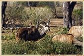 14.東非獵奇行-玻茲瓦納-丘北國家公園:_MG_2707玻茲瓦那_蠻荒樂園-丘北國家公園.JPG