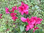春節參拜走春-廟宇之美:IMG_4227.JPG