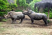 15-5-峇里島-Safari Marine Park野生動物園:IMG_1144峇里島-Safari Marine Park野生動物園.jpg