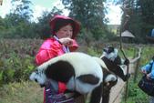 美女們被狐猴溫馨親切有禮的親親_在馬達加斯加-狐猴島Lemur Island:IMG_0367.jpg
