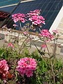 塞爾維亞SERBIA_貝爾格勒BELGRADE采風:DSC01270塞爾維亞_貝爾格勒BELGRADE_花卉.jpg