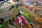 世界上最迷人的50個地方,你去過嗎?來看看!:中國雲南梯田.jpg