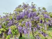 紫藤咖啡園-淡水二店:20210322_122920-uid-0CF63E8A-5E95-4537-845C-046BEED7A607-7860955.jpg