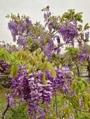 紫藤咖啡園-淡水二店:20210322_123005-uid-2980E66C-389E-439C-9686-2C1E21AEC608-9476971.jpg