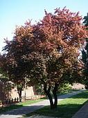 塞爾維亞SERBIA_貝爾格勒BELGRADE采風:DSC01295塞爾維亞_貝爾格勒BELGRADE_花卉.jpg