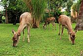 15-5-峇里島-Safari Marine Park野生動物園:IMG_1289峇里島-Safari Marine Park野生動物園.jpg