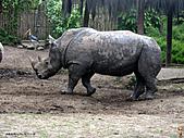 15-5-峇里島-Safari Marine Park野生動物園:IMG_6565峇里島-Safari Marine Park野生動物園.jpg