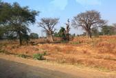 南部非洲32天探索之旅-馬拉威MALAW 6-5-5里旺國家公園狩獵巡禮:IMG_1861.JPG