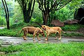 15-5-峇里島-Safari Marine Park野生動物園:IMG_1247峇里島-Safari Marine Park野生動物園.jpg