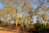 南部非洲32天探索之旅-馬拉威MALAW 6-5-5里旺國家公園狩獵巡禮:IMG_1867.JPG