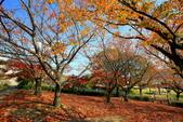 日本四國人文藝術+楓紅深度之旅-小豆島橄欖公園53-36:A81Q0320.JPG