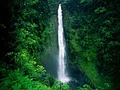 夏威夷全景 :圖片4-大島--阿卡卡瀑布,Akaka Falls, Big Island.jpg