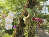 日本關西賞櫻深度之旅-鳥取花迴廊42-8:IMG_2362.JPG