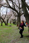 日本12天賞紫藤....VIP團之旅34-17 百年老欉櫻花在牧場內飄飄櫻吹雪...:A81Q6822.JPG