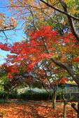 日本四國人文藝術+楓紅深度之旅-小豆島橄欖公園53-36:A81Q0325.JPG