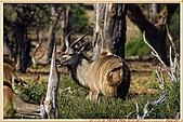 14.東非獵奇行-玻茲瓦納-丘北國家公園:_MG_2715玻茲瓦那_蠻荒樂園-丘北國家公園.JPG