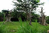 15-5-峇里島-Safari Marine Park野生動物園:IMG_1104峇里島-Safari Marine Park野生動物園.jpg