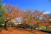 日本四國人文藝術+楓紅深度之旅-小豆島橄欖公園53-36:A81Q0330.JPG