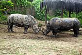 15-5-峇里島-Safari Marine Park野生動物園:IMG_1145峇里島-Safari Marine Park野生動物園.jpg