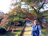 日本四國人文藝術+楓紅深度之旅- 秋之岡山後樂園53-44:IMG_7699.JPG