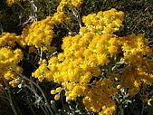 塞爾維亞SERBIA_貝爾格勒BELGRADE采風:DSC01272塞爾維亞_貝爾格勒BELGRADE_花卉.JPG