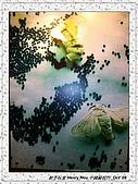 8.中國蘇州_其他掠影:DSC01908蘇州_參觀蠶絲被工場.jpg