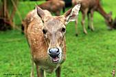 15-5-峇里島-Safari Marine Park野生動物園:IMG_1291峇里島-Safari Marine Park野生動物園.jpg