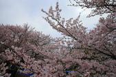 日本九州春櫻尊爵全覽之旅-1_福岡市舞鶴公園-綻放春櫻:A81Q5669.JPG