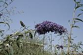 塞爾維亞SERBIA_貝爾格勒BELGRADE采風:_MG_5539塞爾維亞_貝爾格勒BELGRADE_花卉.jpg