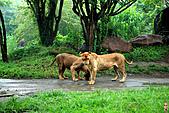 15-5-峇里島-Safari Marine Park野生動物園:IMG_1248峇里島-Safari Marine Park野生動物園.jpg