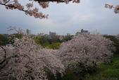 日本九州春櫻尊爵全覽之旅-1_福岡市舞鶴公園-綻放春櫻:A81Q5664.JPG
