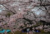 日本九州春櫻尊爵全覽之旅-1_福岡市舞鶴公園-綻放春櫻:A81Q5670.JPG