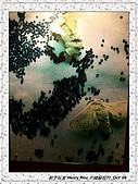 8.中國蘇州_其他掠影:DSC01909蘇州_參觀蠶絲被工場.jpg