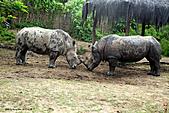 15-5-峇里島-Safari Marine Park野生動物園:IMG_1146峇里島-Safari Marine Park野生動物園.jpg