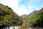 日本四國人文藝術+楓紅深度之旅-別府峽楓葉散策53-23:A81Q0019.JPG