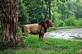 15-5-峇里島-Safari Marine Park野生動物園:IMG_1249峇里島-Safari Marine Park野生動物園.jpg