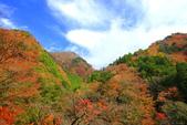 日本四國人文藝術+楓紅深度之旅-別府峽楓葉散策53-23:A81Q0038.JPG
