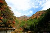 日本四國人文藝術+楓紅深度之旅-別府峽楓葉散策53-23:A81Q0028.JPG