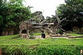 15-5-峇里島-Safari Marine Park野生動物園:IMG_1105峇里島-Safari Marine Park野生動物園.jpg
