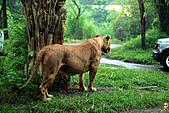 15-5-峇里島-Safari Marine Park野生動物園:IMG_1222峇里島-Safari Marine Park野生動物園.jpg