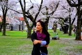 日本12天賞紫藤....VIP團之旅34-17 百年老欉櫻花在牧場內飄飄櫻吹雪...:A81Q6824.JPG